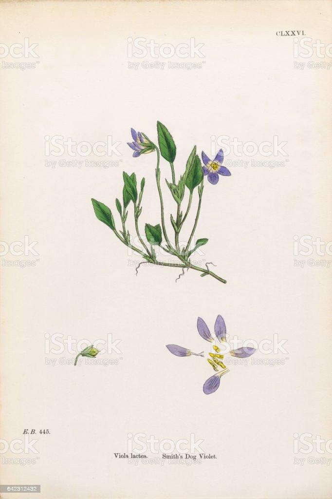 download Лекарственные растения. Первая помощь 2012