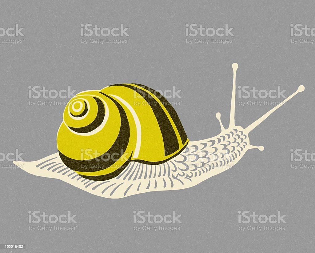 Snail royalty-free snail stock vector art & more images of animal antenna