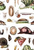 istock Snails seamless 1218056250