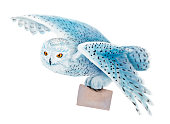 istock Snowy owl flying on white background. 544474272