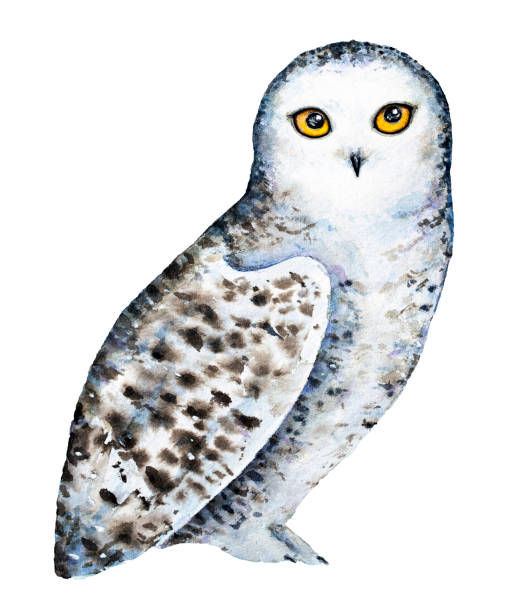 Best White Owl Illustrations, Royalty-Free Vector Graphics ...
