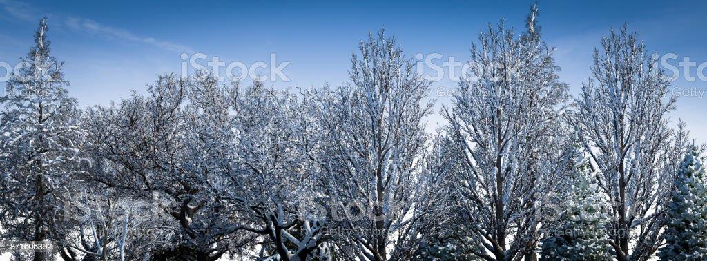 Snowy Trees vector art illustration