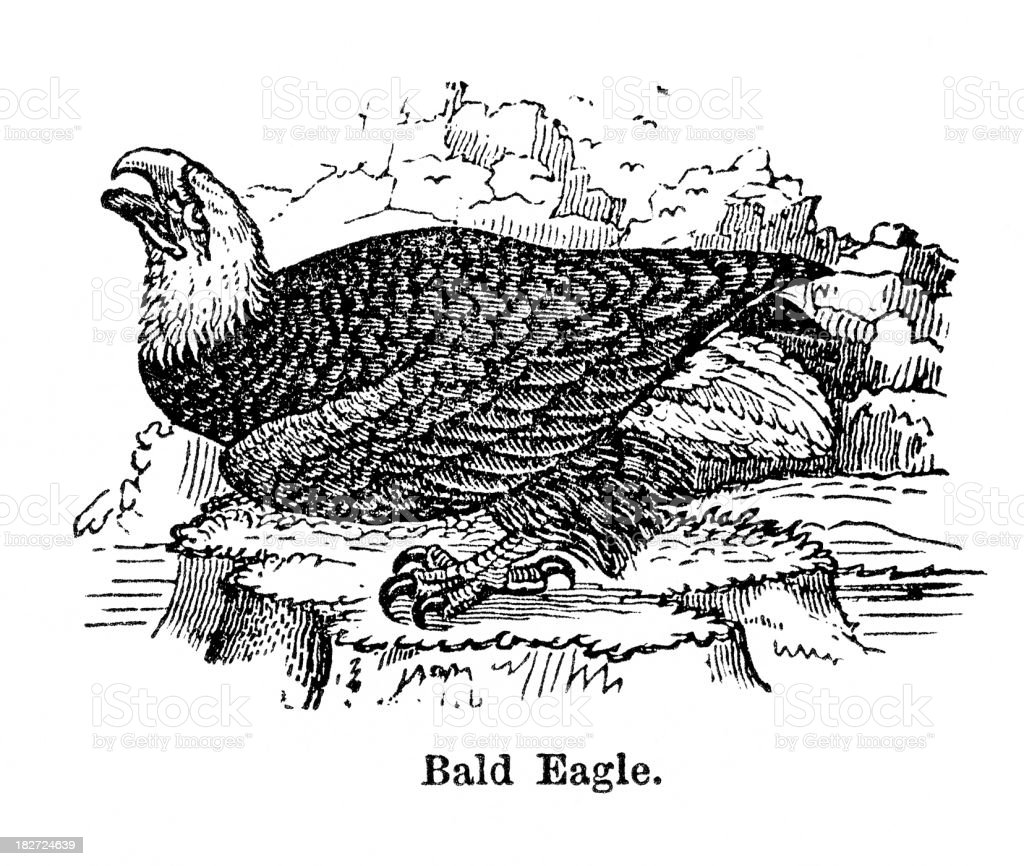 bald eagle royalty-free bald eagle stock vector art & more images of 1880-1889