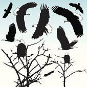 A selection of bald eagles in semi-silhouette. Easy to edit.