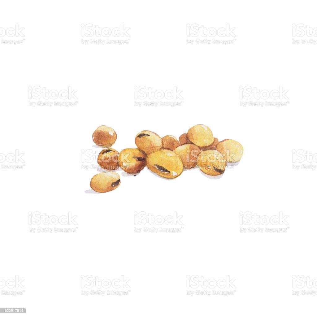 大豆豆向量藝術插圖
