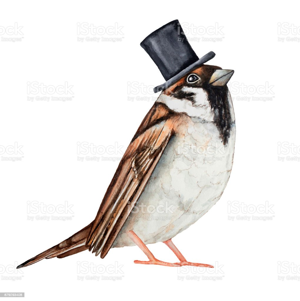 Sparrow bird dressed in black top hat. Invitation card, ticket, design, poster, label, badge, decoration, greeting element character. vector art illustration
