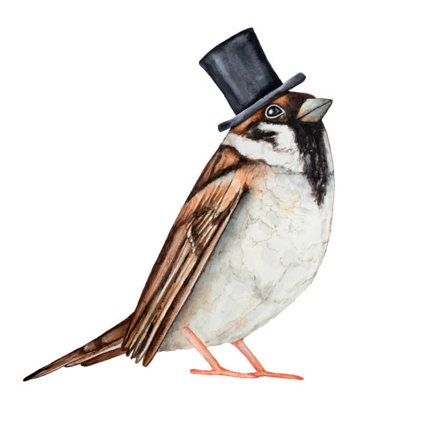 Sparrow bird dressed in black top hat. Invitation card, ticket, design, poster, label, badge, decoration, greeting element character. vector art illustration