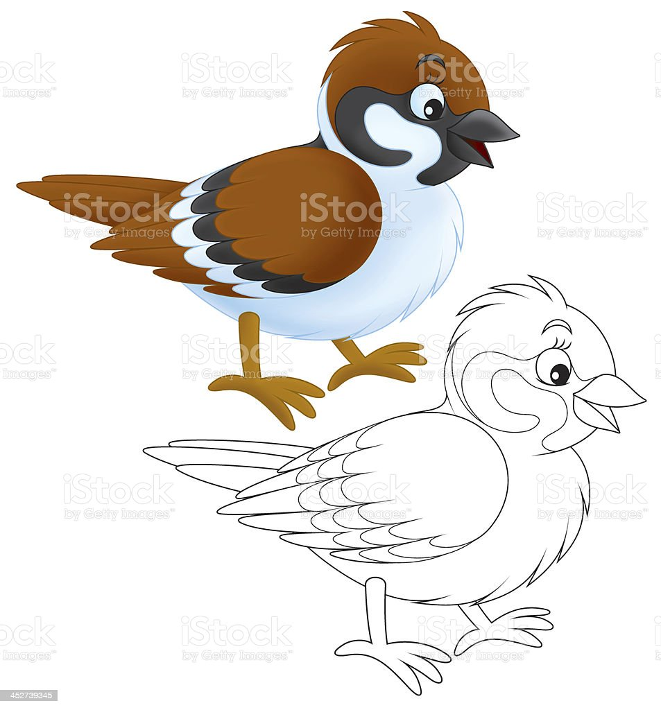 royalty free sparrow clipart clip art vector images illustrations rh istockphoto com sparrow clipart images clipart sparrow bird