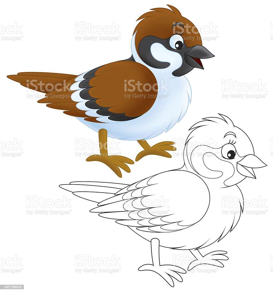 royalty free sparrow clipart clip art vector images illustrations rh istockphoto com sparrow clipart outline sparrow clipart outline