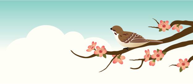Sparrow on a cherry tree