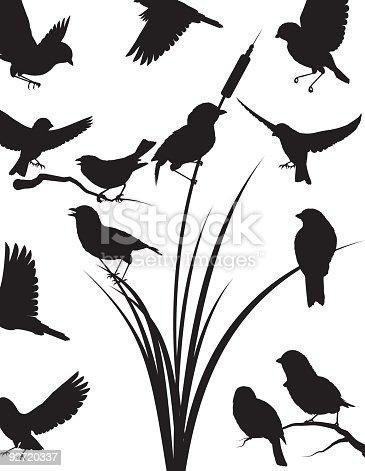 istock Sparrow silhouette 92720337