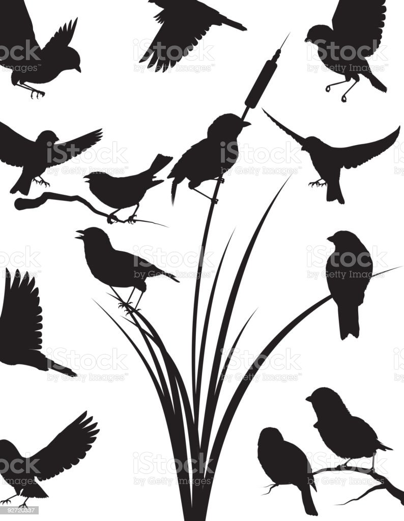 royalty free mockingbird clip art vector images illustrations rh istockphoto com  mockingbird clipart free