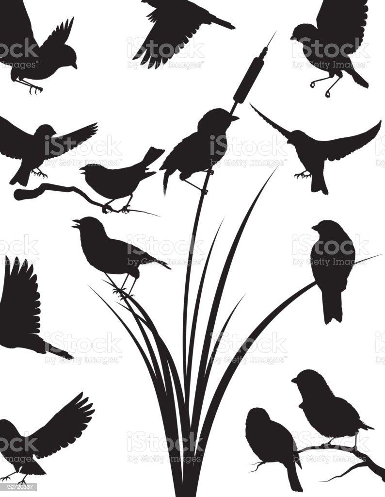 Sparrow silhouette vector art illustration