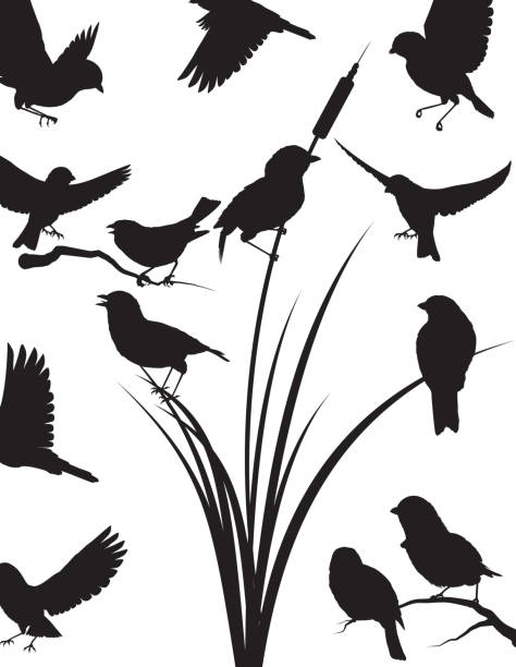 Image result for clip art sparrow flock