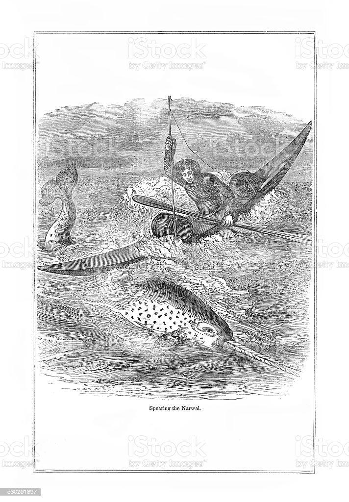 Spearing a Narwal engraving vector art illustration