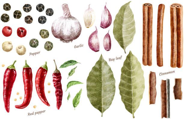 spice collection watercolor illustration, isolated on white - laurel leaf stock illustrations, clip art, cartoons, & icons