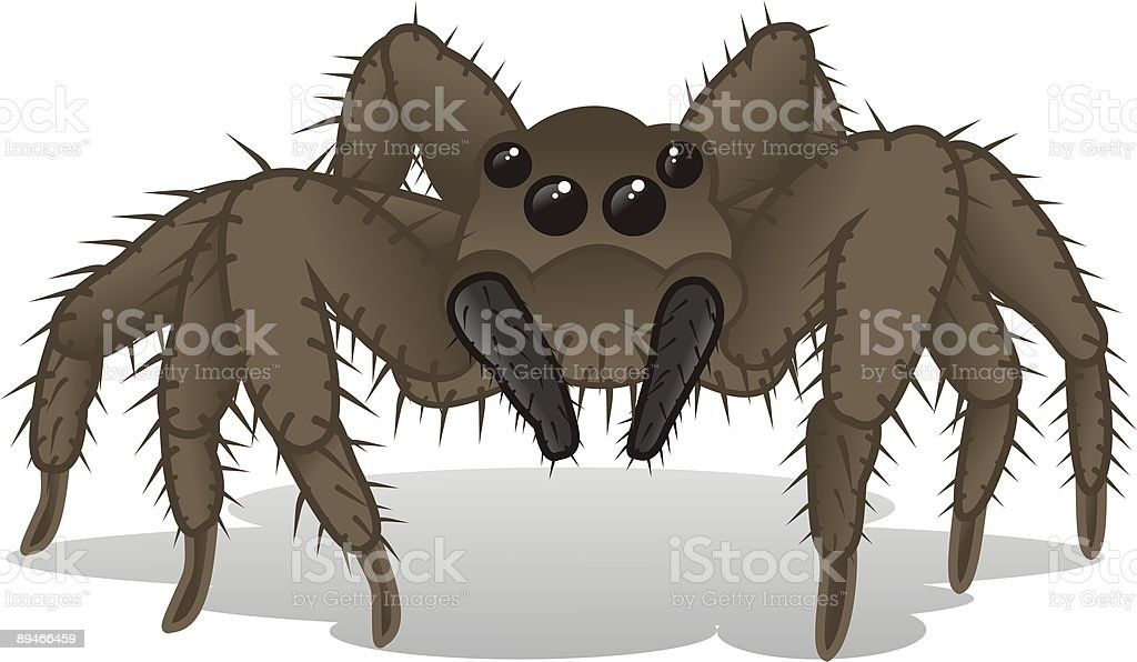 Spider - animal kindom vector art illustration