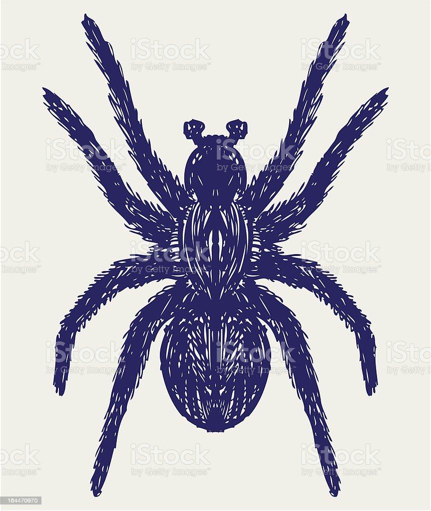 Tarántula Araña - Arte vectorial de stock y más imágenes de ...