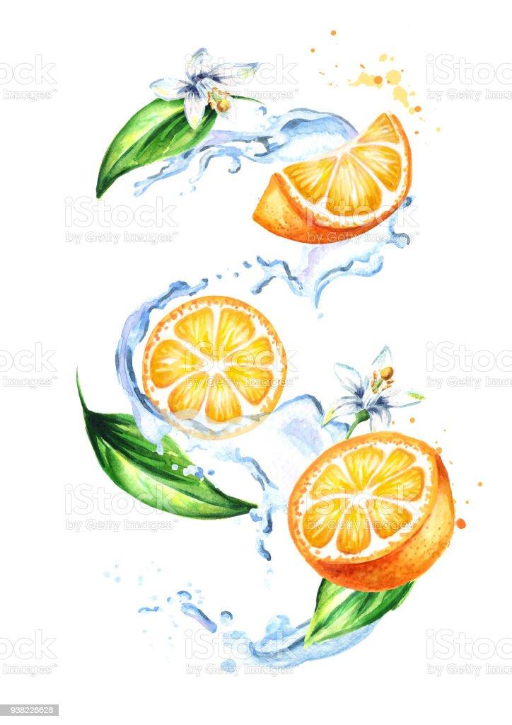 Ilustración de Splash Con Naranja Frutas Hojas Y Flores Ilustración ...