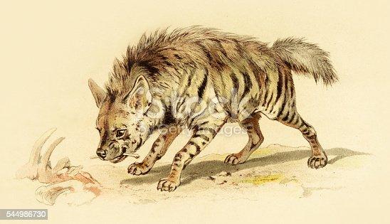 spotted hyena illustration 1888 stock vector art 544986730 istock