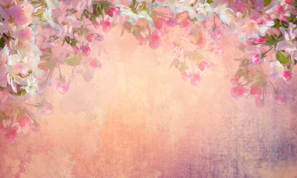 Spring Cherry Blossom Painting Spring cherry blossom vintage background. Sakura flowers on canvas. Painting style floral art on expressive shabby fabric texture shabby chic stock illustrations