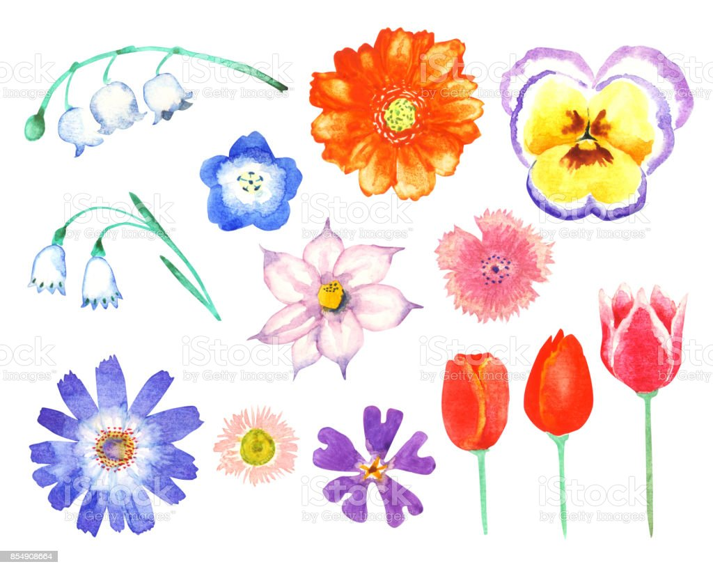Spring Flower Stock Vector Art More Images Of Beauty 854908664