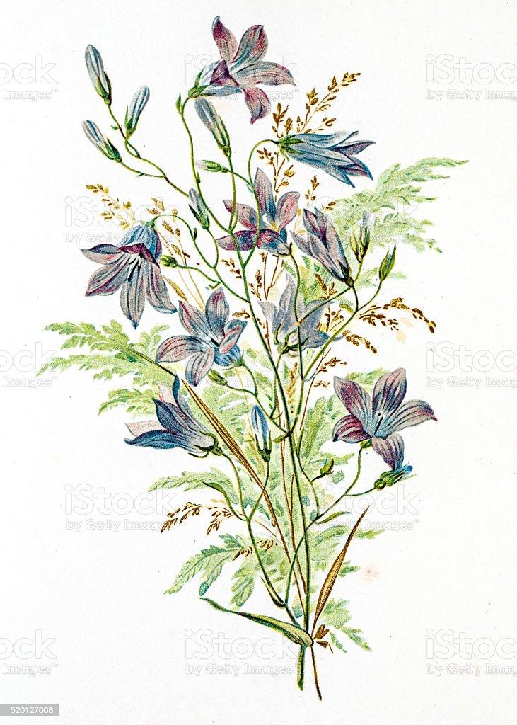 Spring flowers composition 19 century illustration vector art illustration