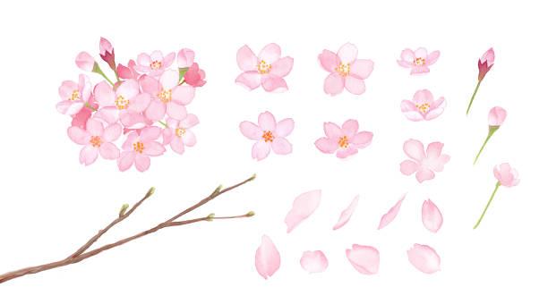 春の花:桜の要素のセット-水彩画 - 桜点のイラスト素材/クリップアート素材/マンガ素材/アイコン素材