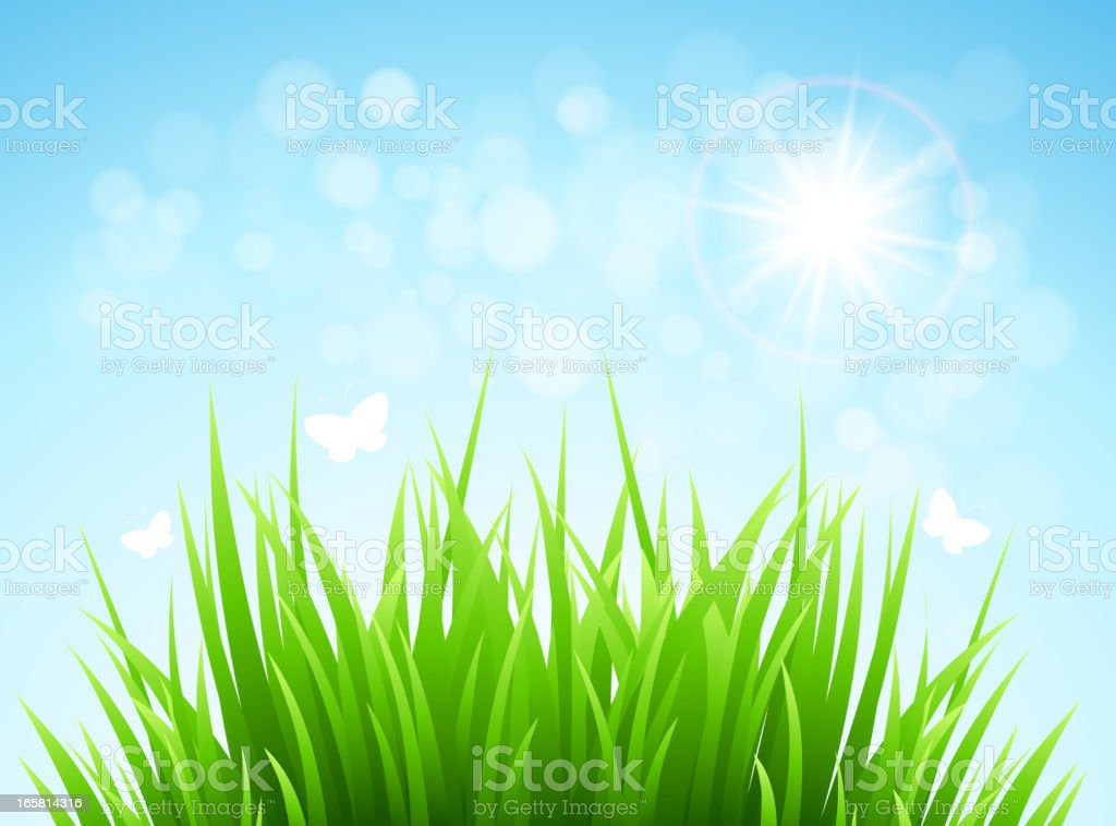 Spring grass royalty-free stock vector art