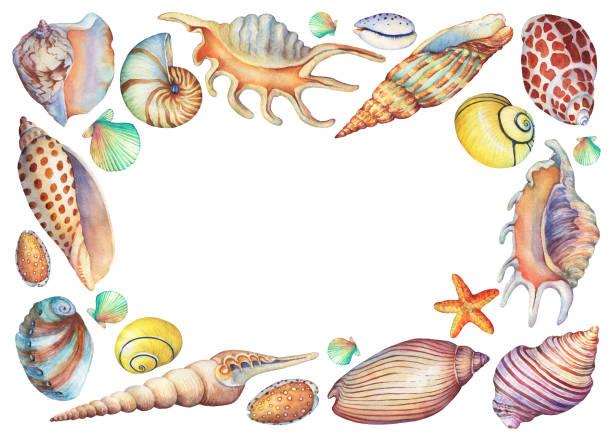 illustrazioni stock, clip art, cartoni animati e icone di tendenza di square frame with hand painted underwater life objects. marine design. hand drawn watercolor painting on white background. - immerse in the stars