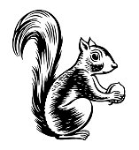 Squirrel. Vector illustration. Black and white vector objects.