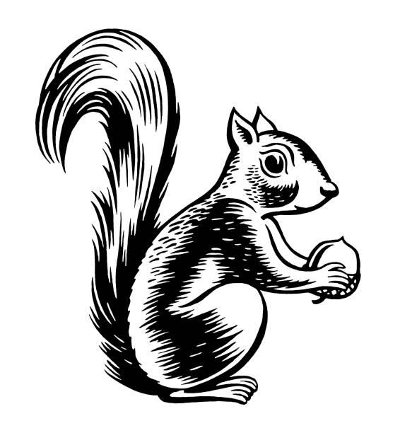illustrations, cliparts, dessins animés et icônes de écureuil tenant noix - écureui