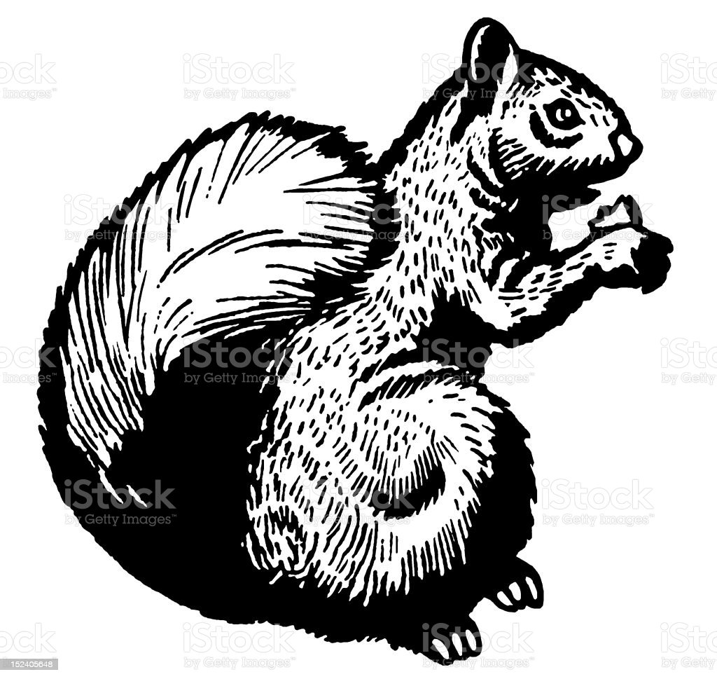 Squirrel royalty-free squirrel stock vector art & more images of animal