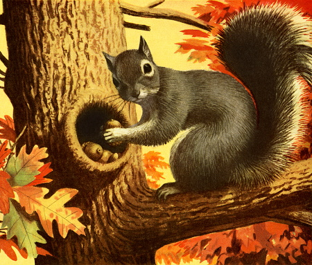 Squirrel Storing Nuts