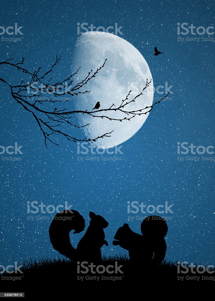 squirrels in love in the moonlight vector art illustration