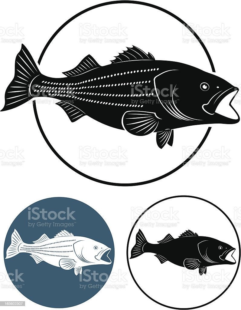 Sriped Bass vector art illustration
