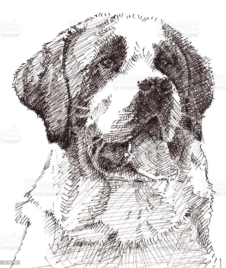 St Bernard Dog vector art illustration