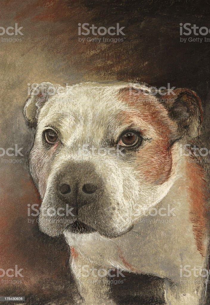 Staffordshire Bull Terrier illustration vector art illustration
