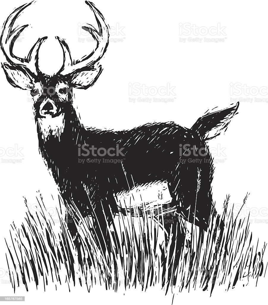 standing deer vector art illustration