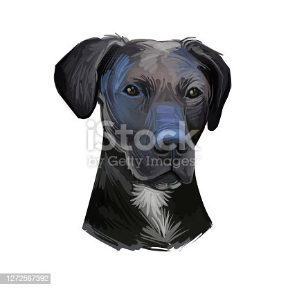 istock Stephens Cur scent hound ur dog breed isolated on white. Digital art illustration. Animal watercolor portrait closeup isolated muzzle of pet, canine hand drawn clipart, animalistic drawing, doggy. 1272567392