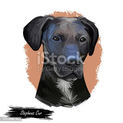 istock Stephens Cur scent hound ur dog breed isolated on white. Digital art illustration. Animal watercolor portrait closeup isolated muzzle of pet, canine hand drawn clipart, animalistic drawing, doggy. 1272567403