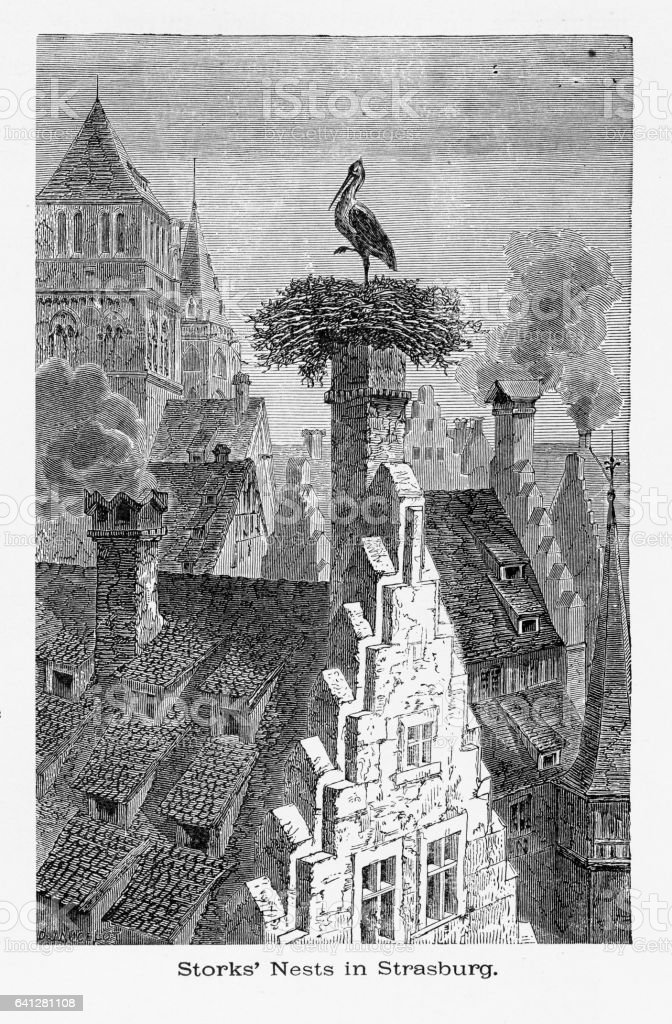 Cigognes qui nichent sur les cheminées à Strasbourg, Strasbourg, en Allemagne, Circa 1887 - Illustration vectorielle