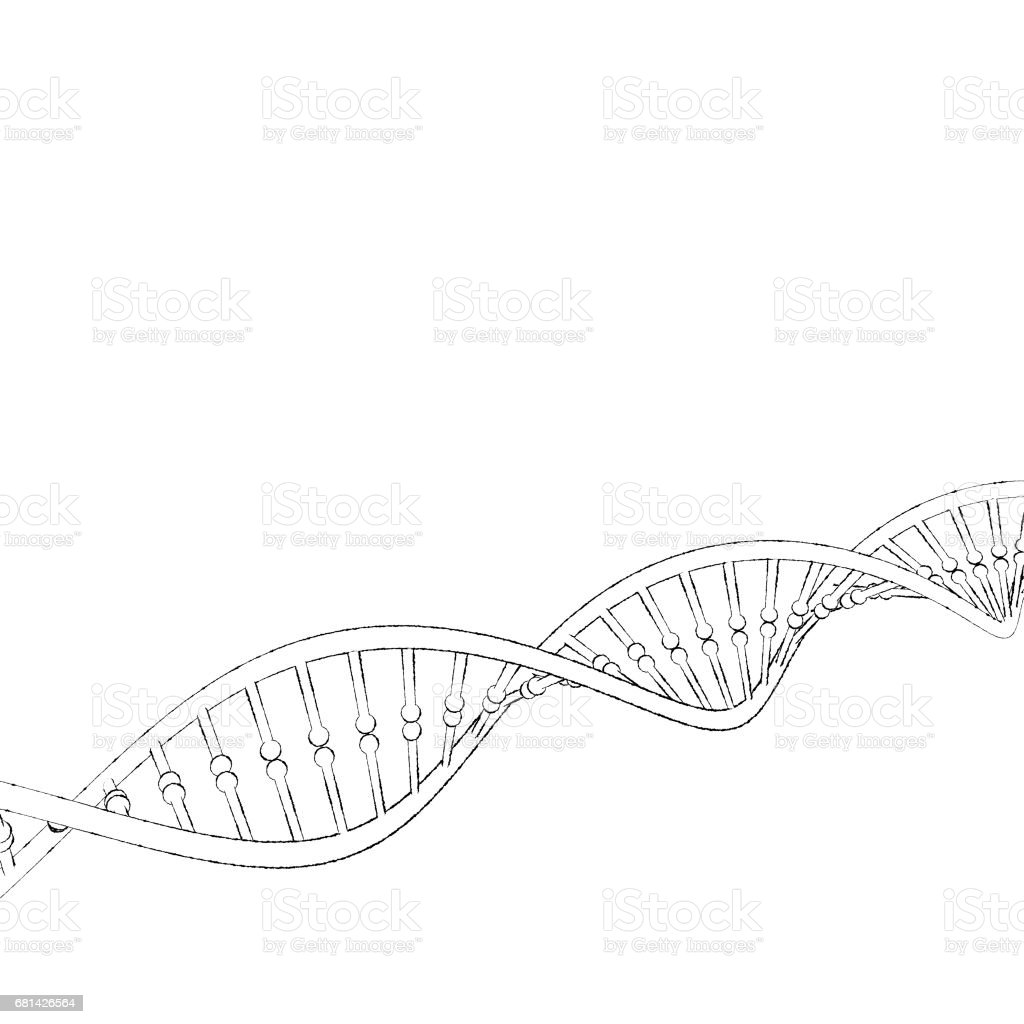 DNA strand. Isolated on white background. Sketch illustration. royalty-free dna strand isolated on white background sketch illustration stock vector art & more images of biology