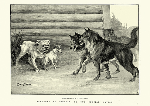 Strangers in a strange land, confrontation between dogs, Siberia, 19th Century