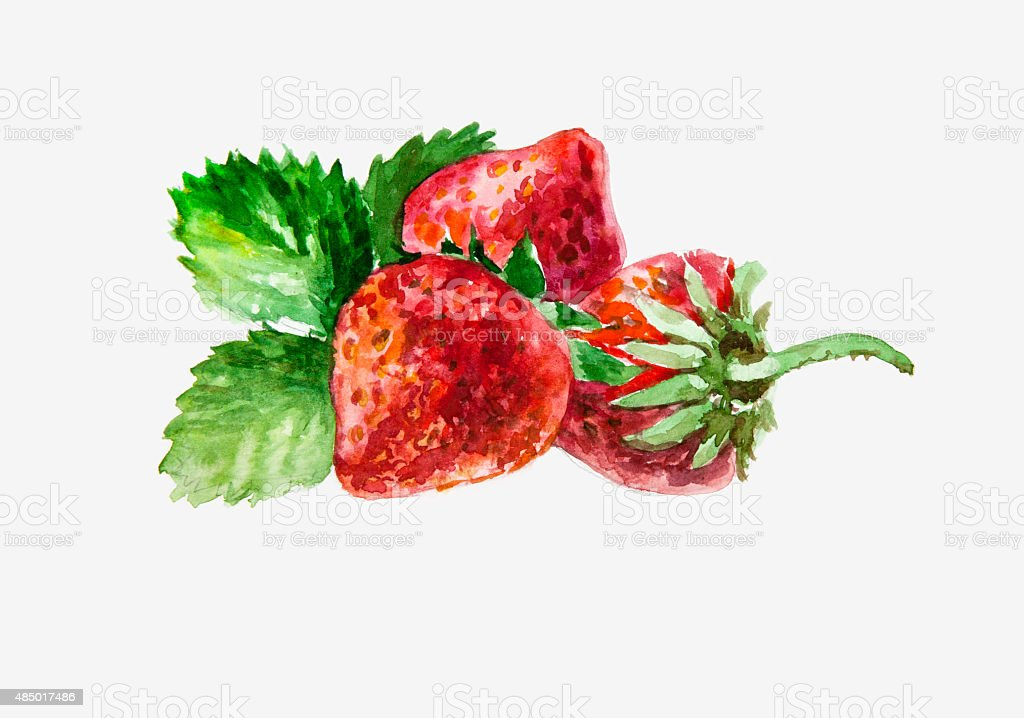 Strawberry. Watercolor vector art illustration