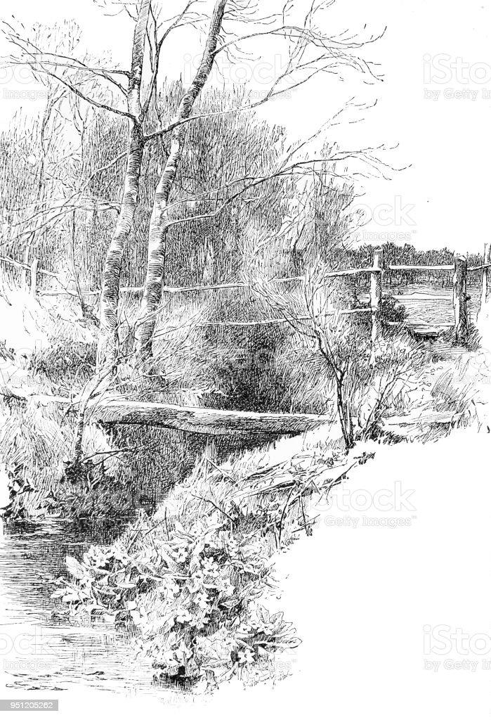 Stream leaving the moor in Hampshire vector art illustration