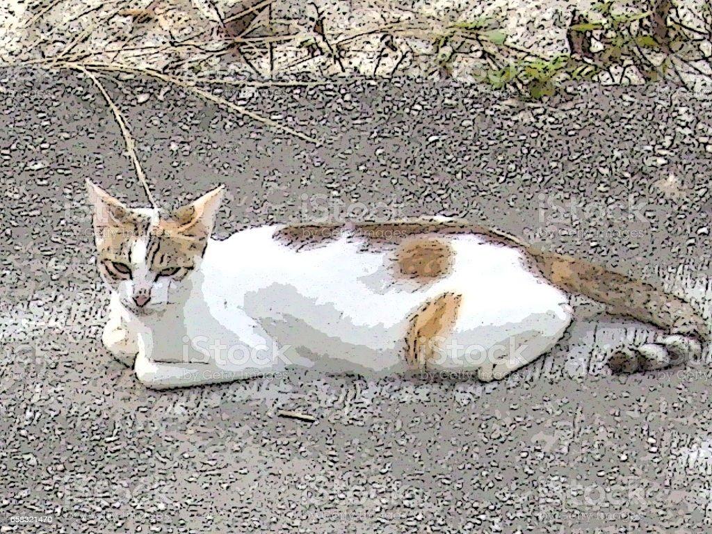 Street CatModels vector art illustration