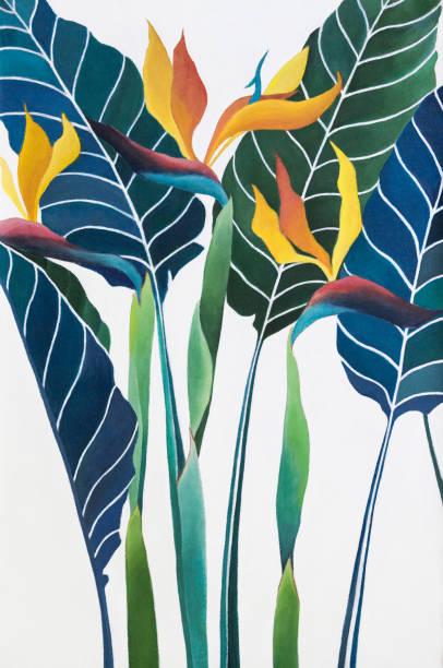 bildbanksillustrationer, clip art samt tecknat material och ikoner med strelitzia reginae blomma målning på duk - swedish nature