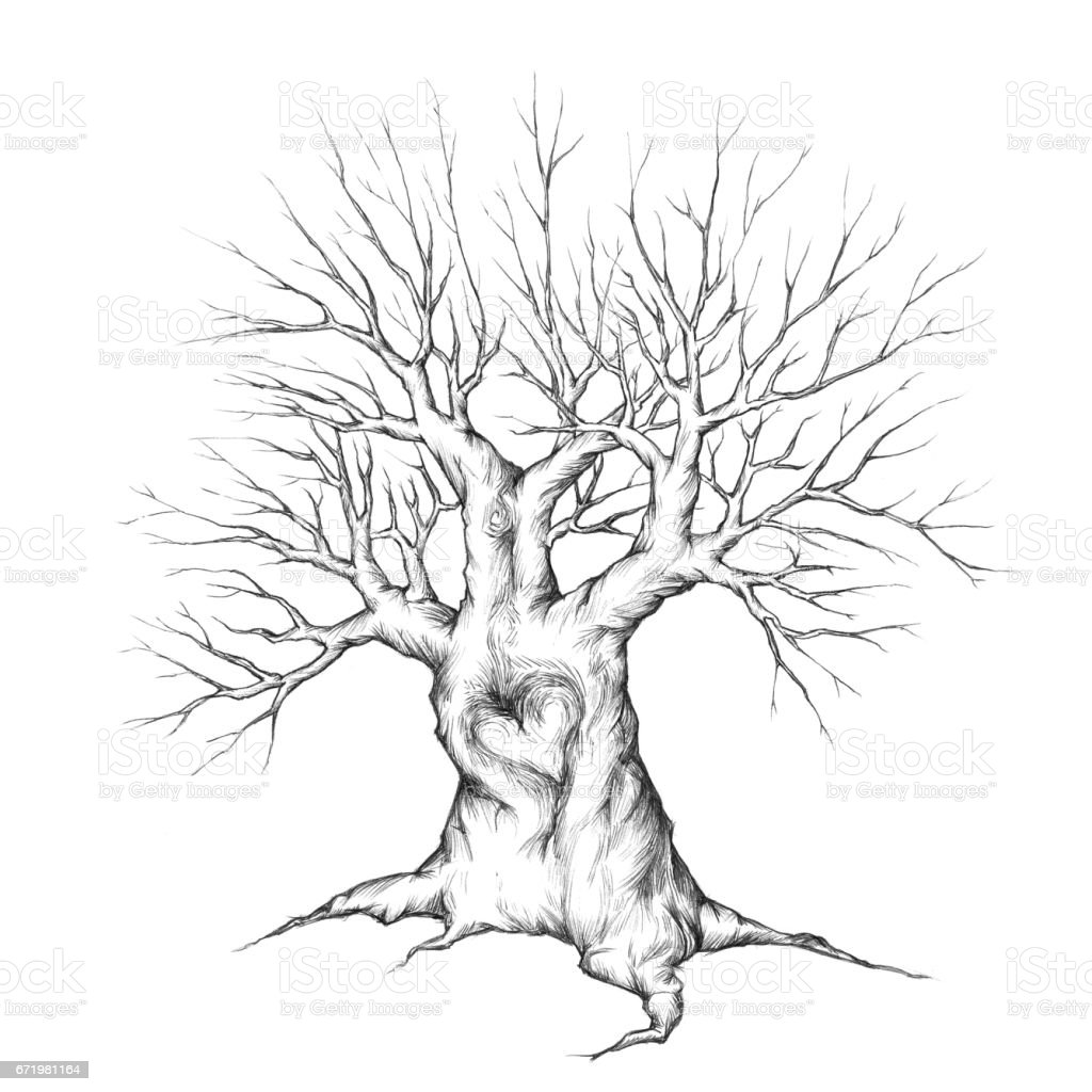 Strong Tree with a heart in the bark – Vektorgrafik