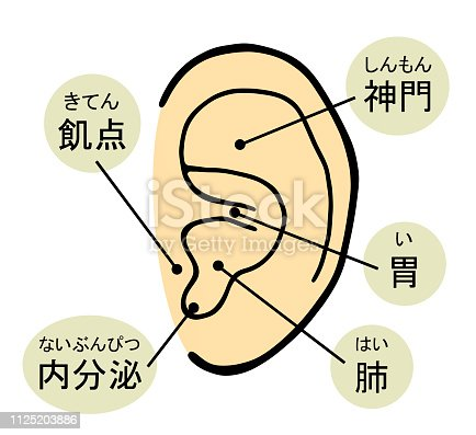 This is the structure of the ear.